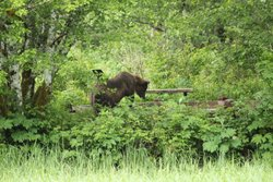 Officials urge caution as bear sightings continue