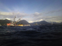 First herring opening yields roughly 2,100T