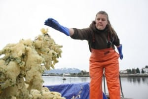 Jessica Gill, a fisheries biologist with the Sitka Tribe of Alaska, throws hemlock branches coated in herring roe onto the pile on Wednesday afternoon. (KCAW photo by Ed Ronco)