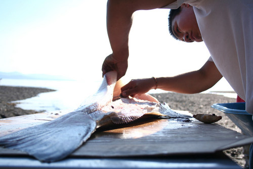 Shawaan Jackson-Gamble cleans a halibut for the Kake culture camp. Photo by Erik Neumann, KCAW – Sitka.