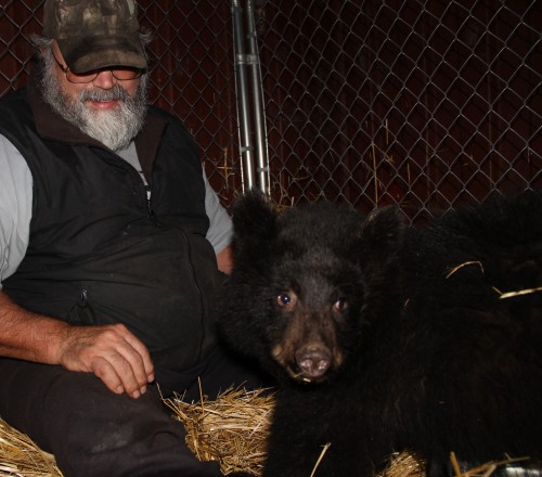 Les Kinnear, who runs Fortress of the Bear, feeds the 9-month-old black bear cub by hand. (Rachel Waldholz, KCAW)