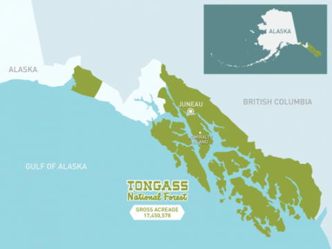 2008 Tongass plan to be reviewed, amended