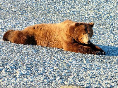 Let's bear down!