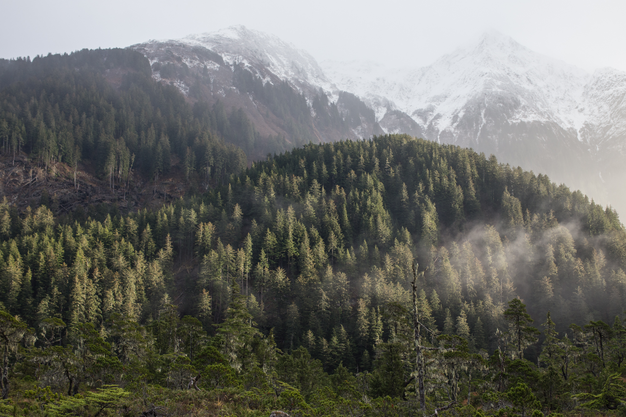 Trying to figure out the future of Tongass timber – by February