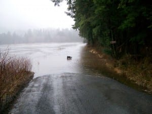 A dog reconsiders his walk down the Nelson Logging Road. A 12-foot high tide plus heavy rains sent Starrigavan Creek over its banks at 1 PM today (1-21-15). (Hugh Bevan photo)