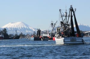 Seiners in the fourth opening of the Sitka Sound sac roe herring fishery, in 2014. (Rachel Waldholz/KCAW)
