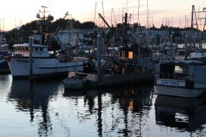 Seiners in ANB Harbor during the 2015 herring season. A controlled fishery meant fewer boats in town. (Rachel Waldholz/KCAW)