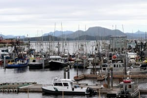 A forest of trolling poles in Sitka's ANB harbor, July 2015. (Rachel Waldholz/KCAW)