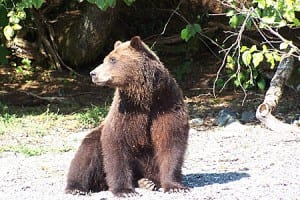 Brown_Bear_sheilacameron