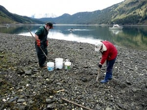 Clam digging is popular throughout coastal Alaska. These clam diggers are working near Sadie Cove, on Alaska's Kenai Peninsula. (Flickr photo/Isaac Wedin)