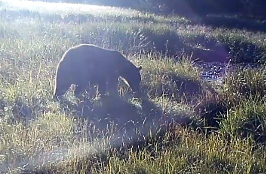 Video: Sitka's bears when we're not around