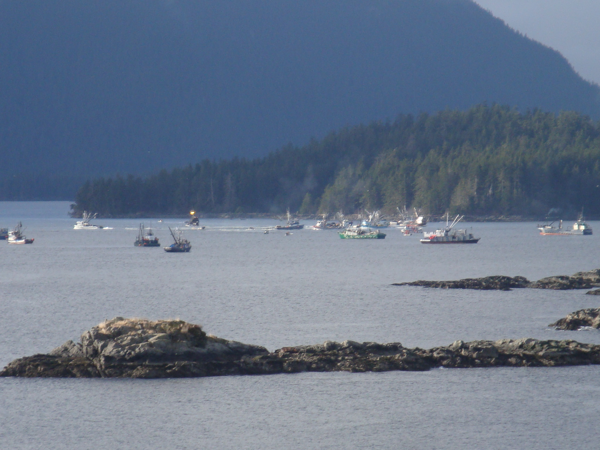 Subsistence herring proposal fails to get committee nod