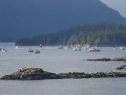 Test set taken as seiners show up for Sitka herring