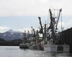 After harvest, Sitka Tribe renews herring concerns