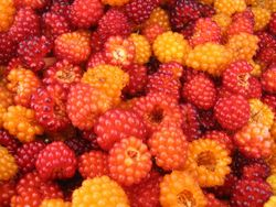 Mind-blowing salmonberry pie
