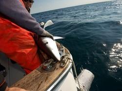 Listen to NPR's series on 'Sustainable Seafood'