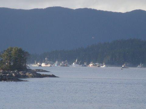 ADF&G begins herring surveys
