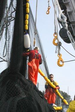 Aerial survey finds predators, no herring
