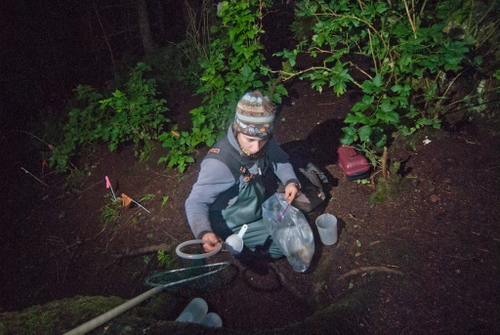 Alexis Will collecting samples at night. (SCS photo/Matt Dolkas)