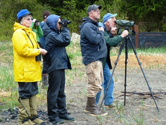 A group of birdwatchers looks for seabirds from Sandy Beach during the Yakutat Tern Festival. Click for a slideshow of festival images. Photo by Ed Schoenfeld, CoastAlaska News.