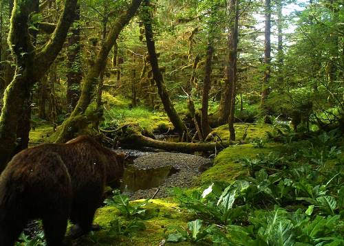 All those bear tracks we see along streams? This is how they get there. (Hugh Bevan photo)