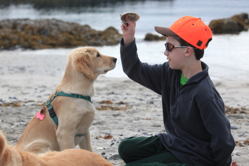 Willow, a 6-month-old golden retriever, helps Trevor Kluting, 14, with his seizures. She's also training to work with Sitka Mountain Rescue. Willow needs shoulder surgery, and her friends are hoping the community can help. (Photo provided)