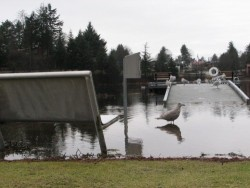 Flooding at Swan Lake covers the dock ramp. (KCAW photo/Emily Forman)