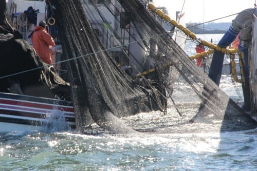 A seiner purses up as a tender pulls alongside to start pumping herring, during the fourth and final opening in the 2014 Sitka Sound sac roe herring fishery. (KCAW photo/Rachel Waldholz)
