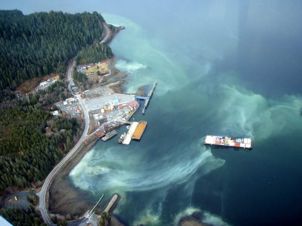 Project to restore herring, starting with Sitka