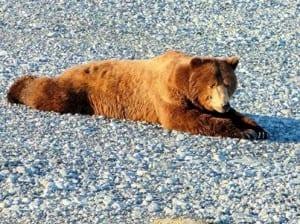 bear stretch