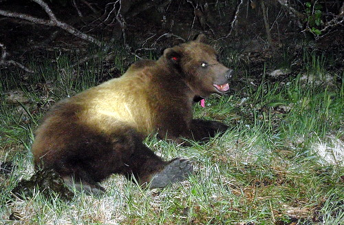 Bear killed after reaching into kitchen window