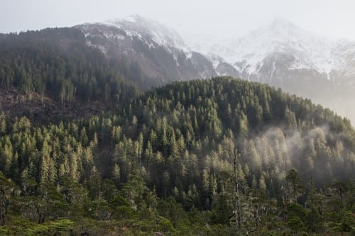 At 17 million acres, the Tongass National Forest, pictured here near Sitka, is the country's largest. (Photo by Mike Hicks)