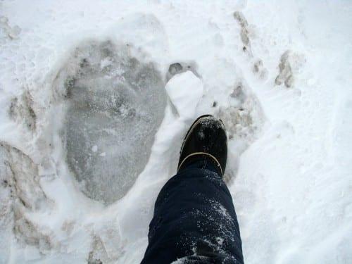 polar bear footpring