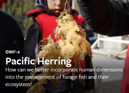 Herring work group connects science and tradition