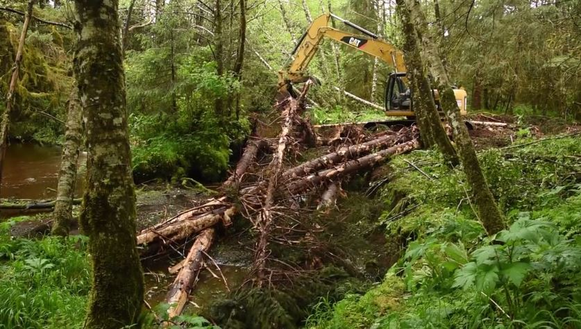 "Tyler Miller uses a trackhoe to move felled timber into the Shelikov River on Kruzof Island, creating habitat for spawning fish. Habitat restoration like this has become a primary focus of the Sitka Ranger District, in partnership with organizations like the Sitka Conservation Society and the Nature Conservancy. ""15 years ago,"" says district ranger Perry Edwards,""the only talking SCS and the Forest Service would do would be to our lawyers."" (SCS video still)"