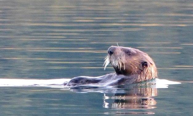Pledge now and win wildlife tour!