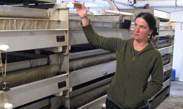 Sitka hatchery's chum run funds improvements