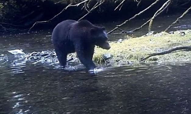 Video: Bear in mind, spring is here!