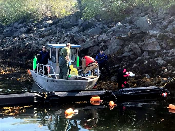 Researchers Set The Stage For Sitka Invasive S Final