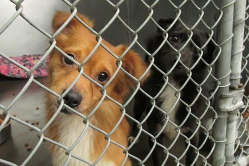 Ketchikan borough reviewing animal control regulations