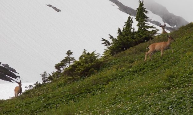 Mild winters push deer population to near-capacity in Sitka area