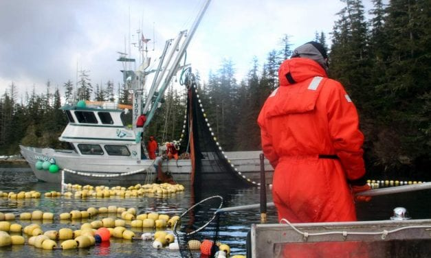 State to allow higher herring harvest next year, STA promises 'drastic action'