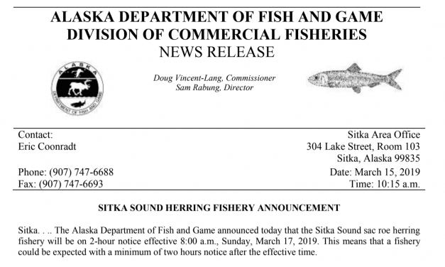 Herring fishery goes on two-hour notice this Sunday