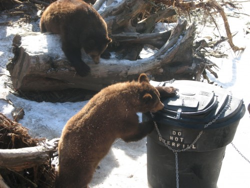 Fish and game biologists emphasize being 'bear aware' this summer