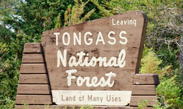 Report: Feds lose millions in Tongass timber sales