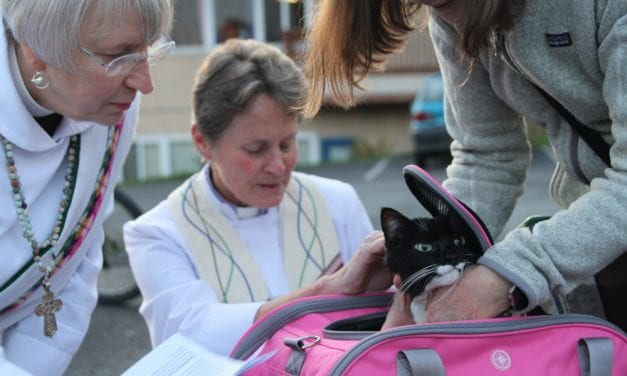 CorvidEYE: Blessing of the pets